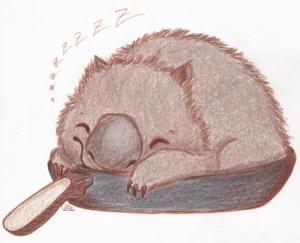 Wombat_coloriert